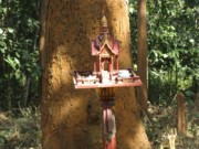 Thailand Tree Shrine