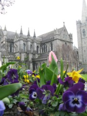 Spring flowers in front of St. Patrick's Cathedral in Dublin
