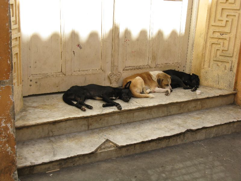 Fabulous Friday Foto: Three Dogs in Recife Brazil