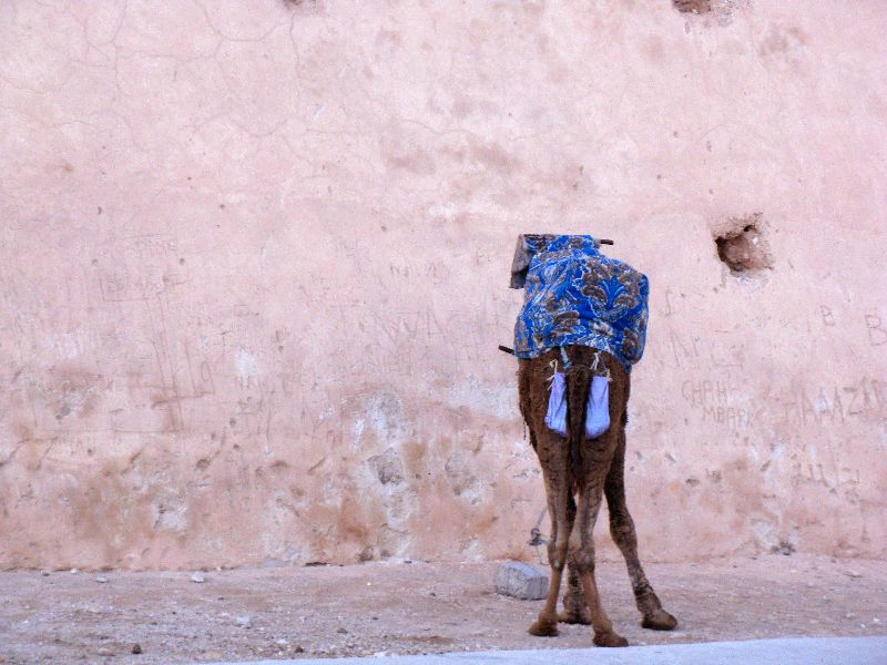 Fabulous Friday Foto: Camel Butt; A Photo of a Camel in Morocco