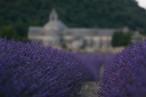 Looking Down the Road:  Riding My Bike Through the Lavender in Provence, France