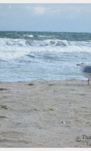 A seagull on the beach in Florida