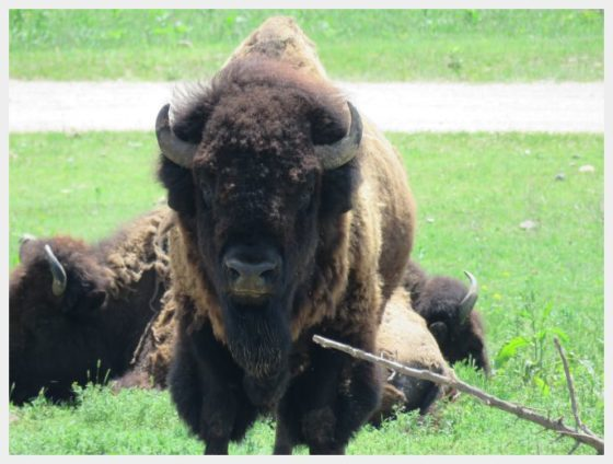 Omaha Wilidlife Safari Park - things to do in Omaha with kids