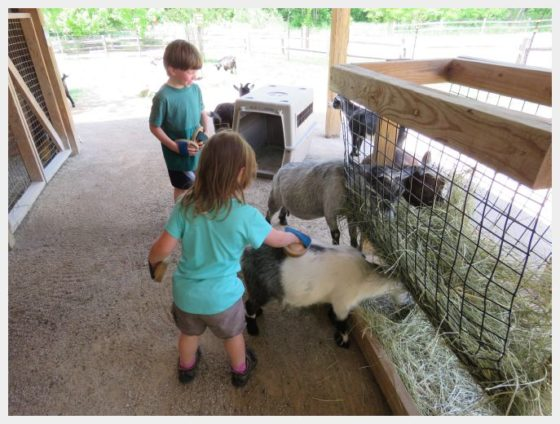 OMaha Wildlife Safari Park - things to do in Omaha with kids