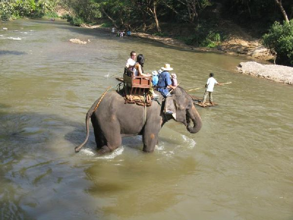 A Firsthand Account of Elephant Abuse in Thailand