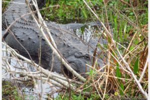 Things to do in Kissimmee Florida – Our Encounter With A Swamp Monster
