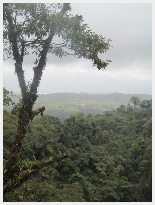 Mistico Arenal Hanging Bridges Park - Rain Forest Canopy