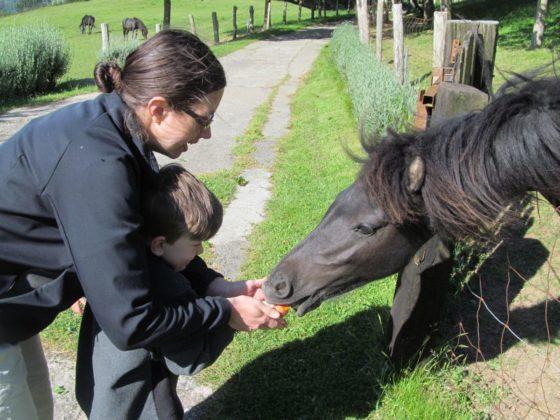 My son feeding the horses on the farm.