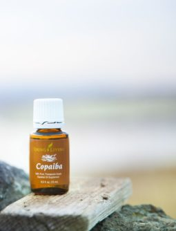 Essential oils for travel to support the muscles - Copaiba